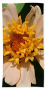 Zinnia From The Candy Mix Beach Towel