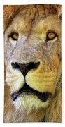 Lion Dafrique Panthera Leo Beach Towel