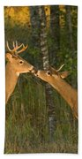White-tailed Deer Beach Towel