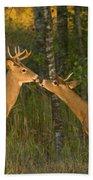 White-tailed Deer Beach Sheet
