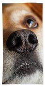 Portrait Of Red Bone Coon Mix Dog Beach Sheet