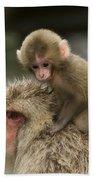 Snow Monkeys Japan Beach Towel