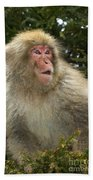 Japanese Macaque Beach Towel