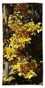 Autumn Color Beach Towel