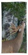 White-tailed Buck Beach Towel