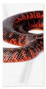 Australian Reptiles On White Beach Towel
