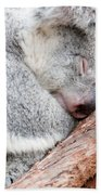 Adorable Koala Bear Taking A Nap Sleeping On A Tree Beach Towel