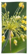 Allium Flavum Or Fireworks Allium Beach Towel