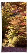 Autumn Colors And Road  Beach Towel