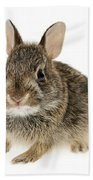 Baby Cottontail Bunny Rabbit Beach Towel by Elena Elisseeva