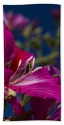 Bauhinia Purpurea - Hawaiian Orchid Tree Beach Towel