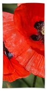 Beautiful Poppies 2 Beach Towel