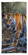 Bengal Tiger Panthera Tigris Tigris Beach Towel