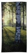 Birch Trees By The Vuoksi River Beach Sheet