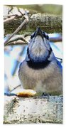 Blue Jay With Bread  Beach Towel