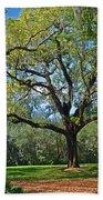 Bok Tower Gardens Oak Tree Beach Towel