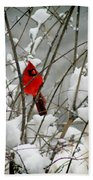 Cardinal In Winter Beach Towel