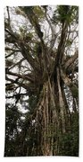 Cathedral Fig Tree Beach Towel