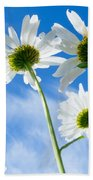 Close-up Shot Of White Daisy Flowers From Below Beach Towel