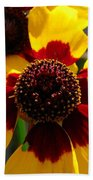Coreopsis Or Golden Tickseed Beach Towel