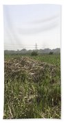 Cut And Dried Grass Along With Growing Grass Beach Towel
