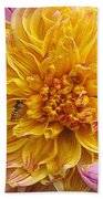 Dahlia Named Lambada Beach Towel