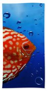 Discus Fish Beach Towel