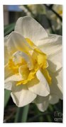 Double Daffodil Named White Lion Beach Towel
