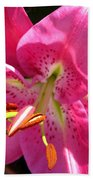 Dwarf Oriental Lily Named Farolito Beach Towel