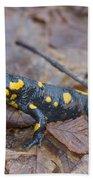 Fire Salamander Beach Sheet