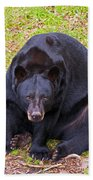 Florida Black Bear Beach Towel