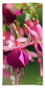 Fuchsia Named Lambada Beach Towel