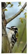 Hairy Woodpecker Beach Towel by Linda Freshwaters Arndt