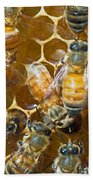 Honey Bees In Hive Beach Towel