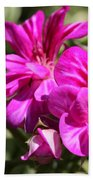 Ivy Geranium Named Contessa Purple Bicolor Beach Towel