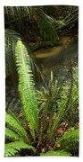 Jungle Stream Beach Towel by Les Cunliffe