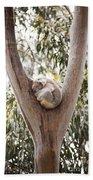 Koala Beach Towel