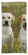 Labrador Retriever Dogs Beach Towel
