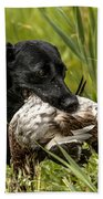 Labrador Retriever Beach Towel