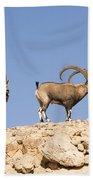 Male Nubian Ibex Beach Towel