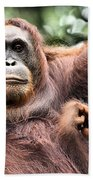 Mother And Baby Orangutan Borneo Beach Towel