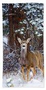 Mule Deer In Snow Beach Towel