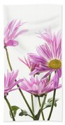 Mums Flowers Against White Background Beach Towel