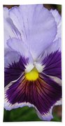 Pansy From The Chalon Supreme Primed Mix Beach Towel