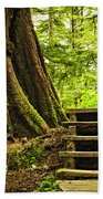 Path In Temperate Rainforest Beach Towel by Elena Elisseeva