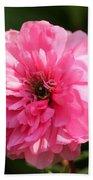 Pink Ranunculus Beach Towel
