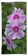 Pink Wood-sorrel  Beach Sheet