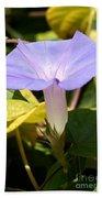 Purple Morning Glory Beach Towel