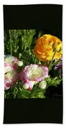 Ranunculus 1 Beach Towel