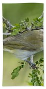 Red-eyed Vireo Beach Towel